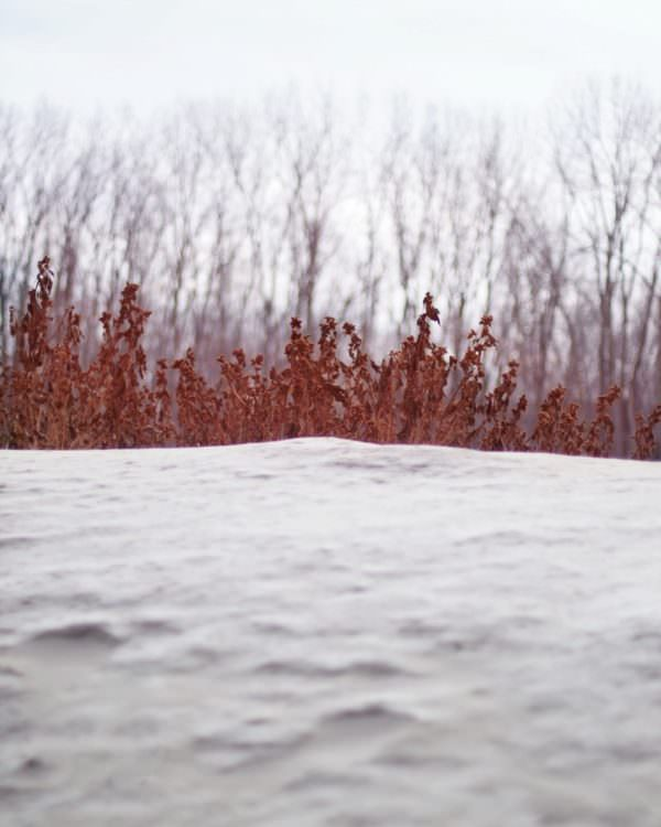 Belle Plaine Mn Photography | Winter Photo Essay | The Color of Winter