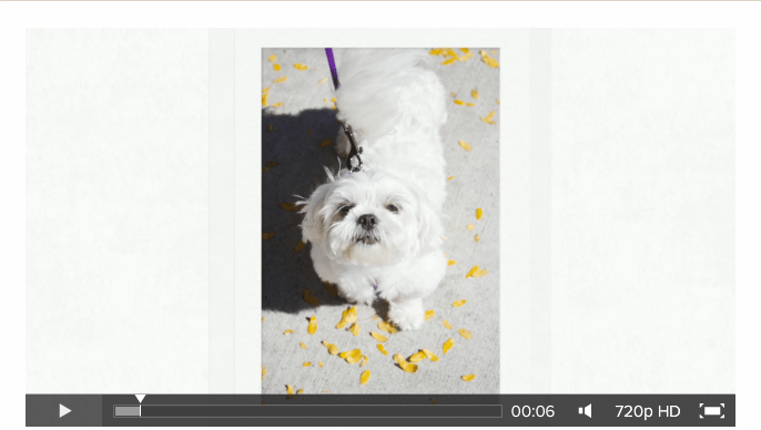 Minnetonka Photography Video Blog NorthStar Shih Tzu Rescue Dogs