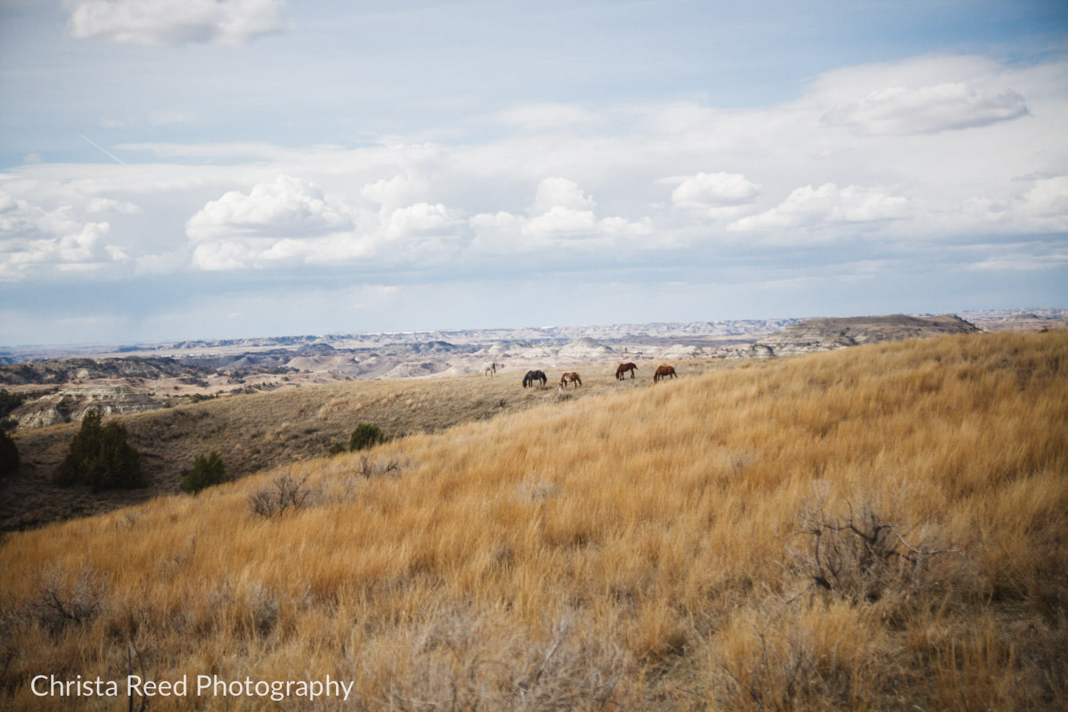 horse and painted canyons at Theodore Roosevelt National Park North Dakota